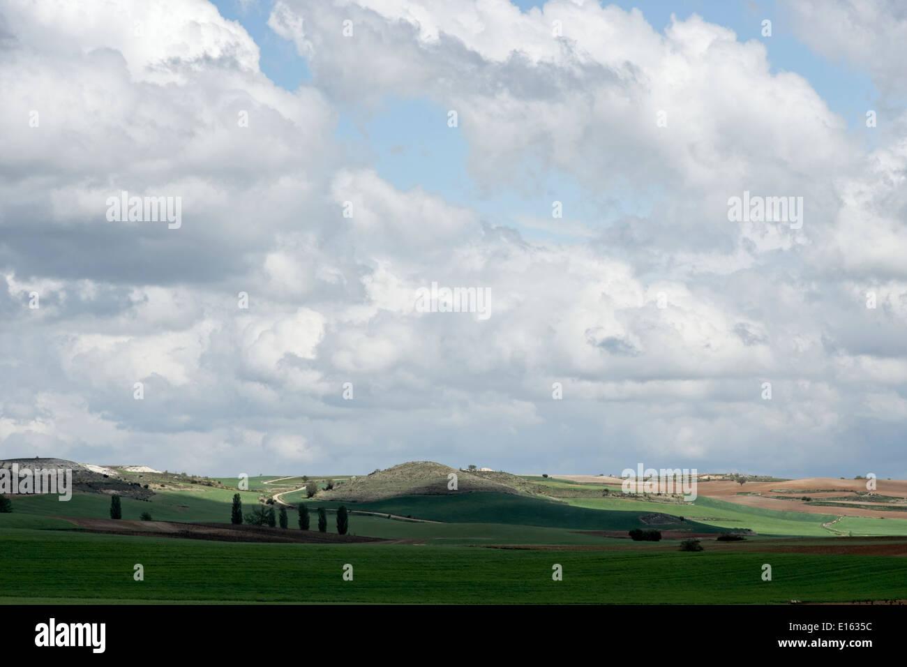 Ribera del Duero countryside, Spain. - Stock Image