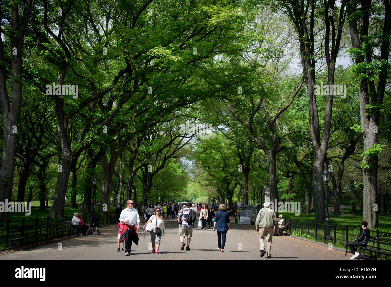 The Literary Walk section of The Mall in New York City's Central Park is a walkway lined with towering American Stock Photo