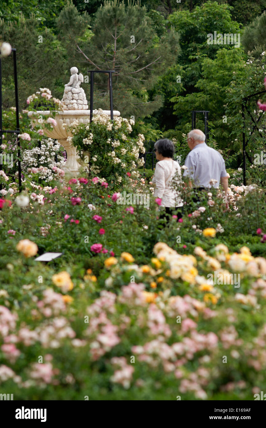 Rose garden in Retiro Park, Madrid, Spain. (Rosaleda) Stock Photo