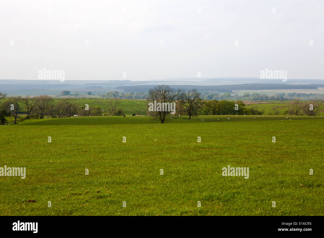looking out over fields and low flat countryside in northumberland national park near haltwhistle uk - Stock Image