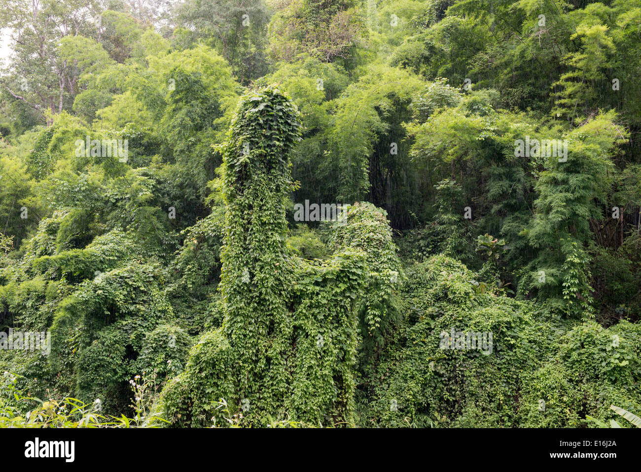 Tropical jungle mountain in northern Thailand, Lampang , Thailand - Stock Image