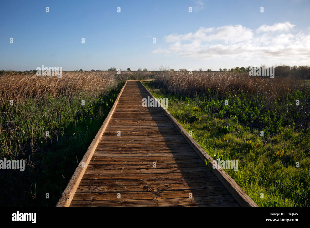 CALIFORNIA - Boardwalk through the wetlands at the Cosumes River Preserve Wildlife Area in the Central Valley. - Stock Image