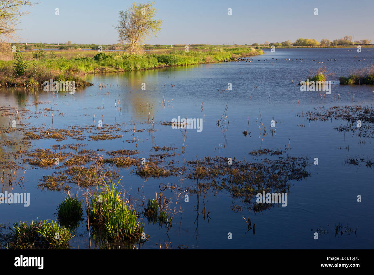 CALIFORNIA - Wetland area at the Cosumes River Preserve Wildlife Area in the Central Valley, located along the Pacific Flyway. - Stock Image