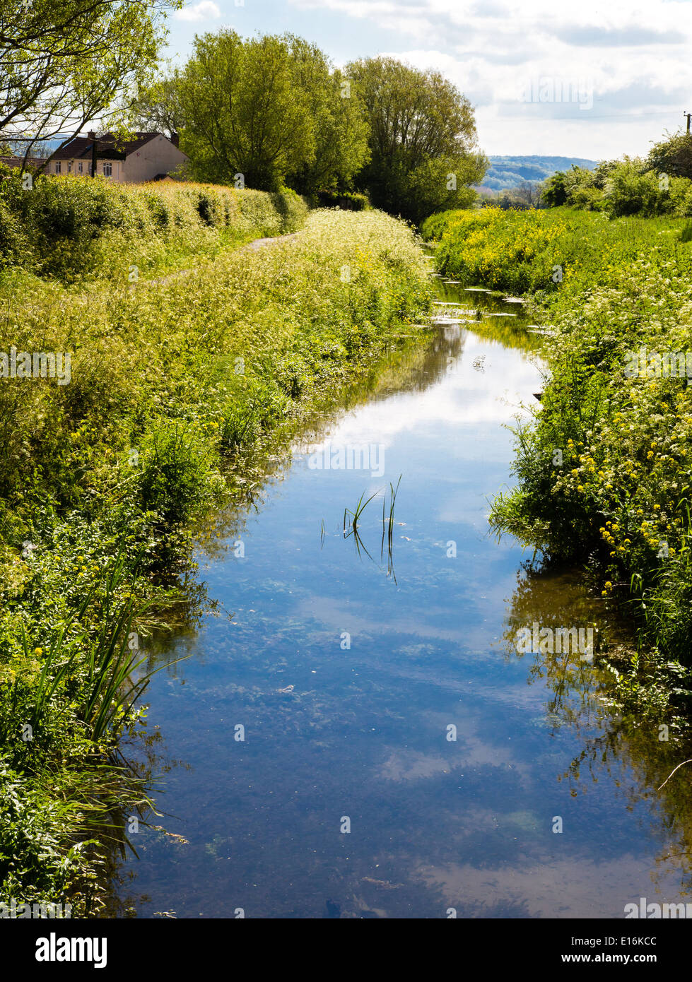 Springtime on the Somerset Levels UK  - a drainage dyke fringed with lush vegetation with the Mendip hills beyond - Stock Image