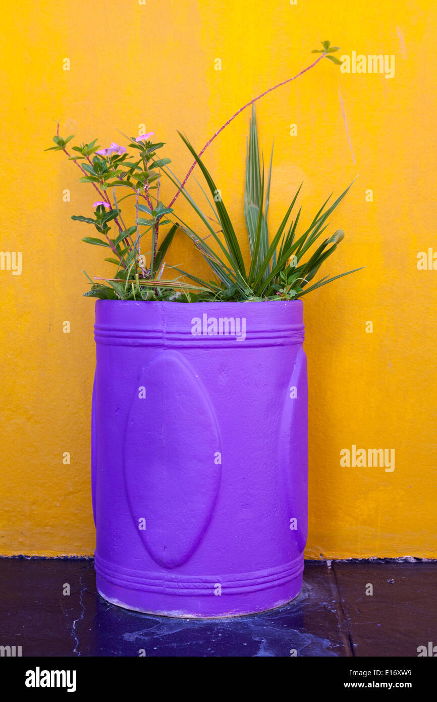Pretty purple flower container standing against bright orange wall on a patio in the Bo Kaap Quarter, Cape Town Stock Photo