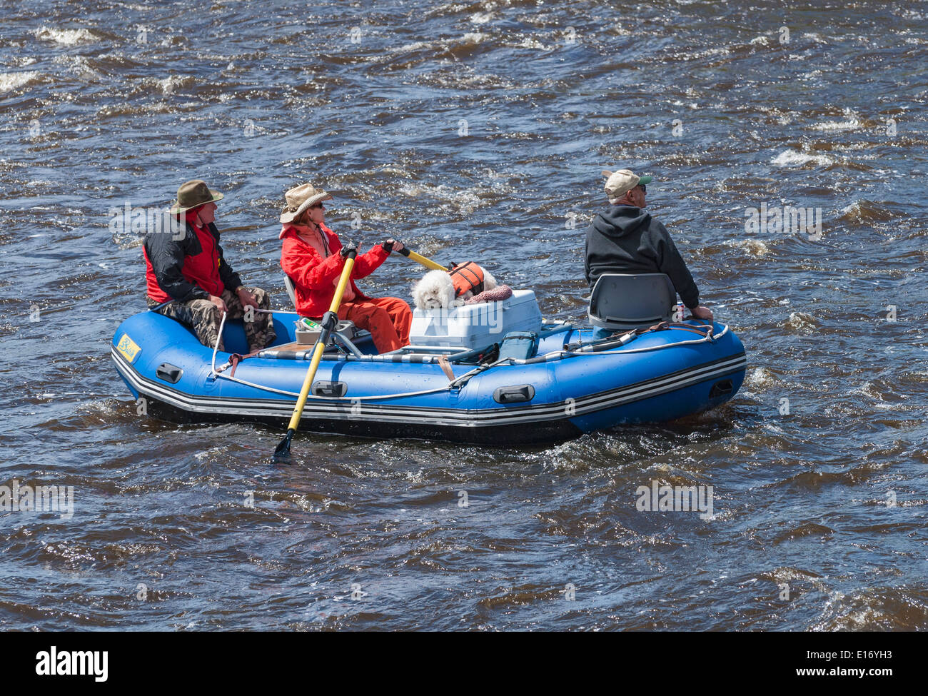 Montana, Big Hole River, inflatable oar boat, three adults with dog - Stock Image