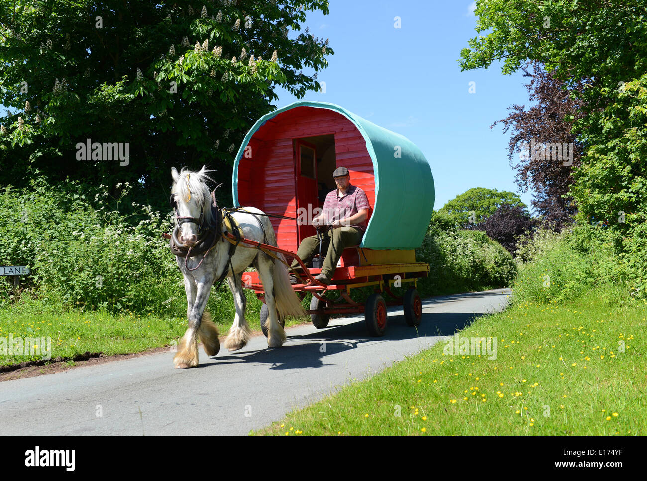 Black Country Traveller 26 year old Chris Millard on his way to Appleby Horse Fair with his bowtop caravan pulled Stock Photo