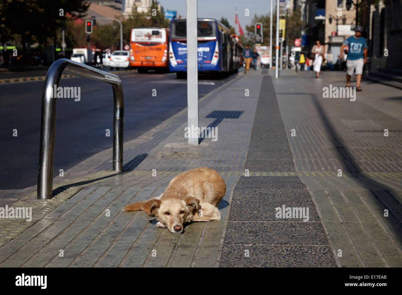 stray dog lying on avenida libertador general bernado o'higgins downtown Santiago Chile - Stock Image
