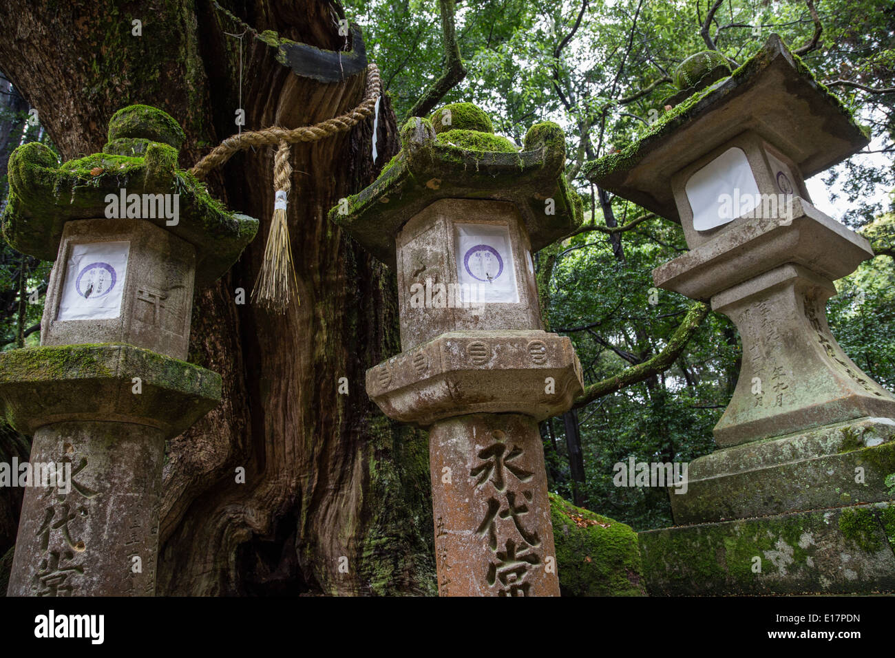 Kasuga-taisha is a Shinto shrine in Nara often called Kasuga Grand Shrine. - Stock Image