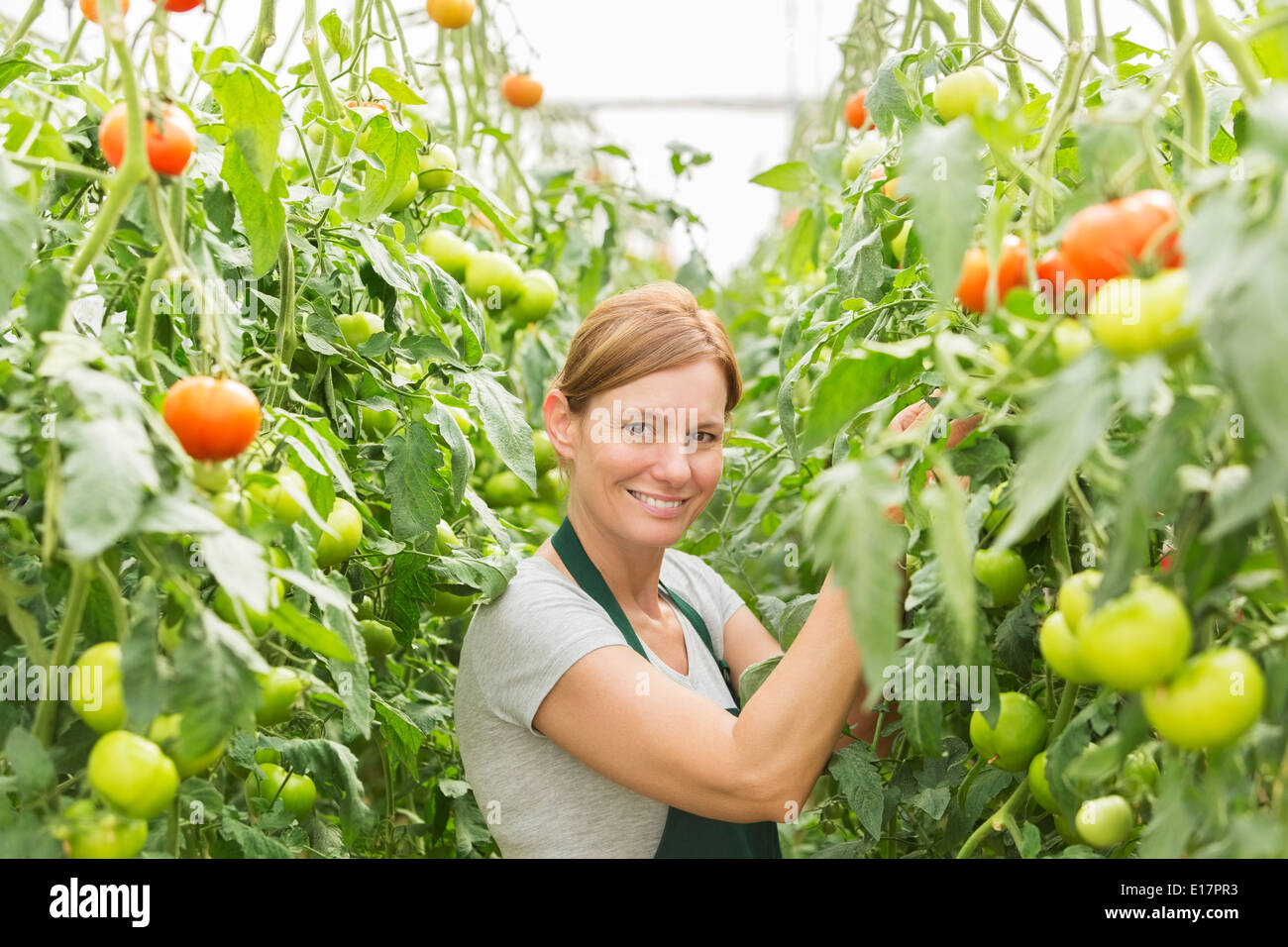 Portrait of woman tending to tomato plants in greenhouse - Stock Image