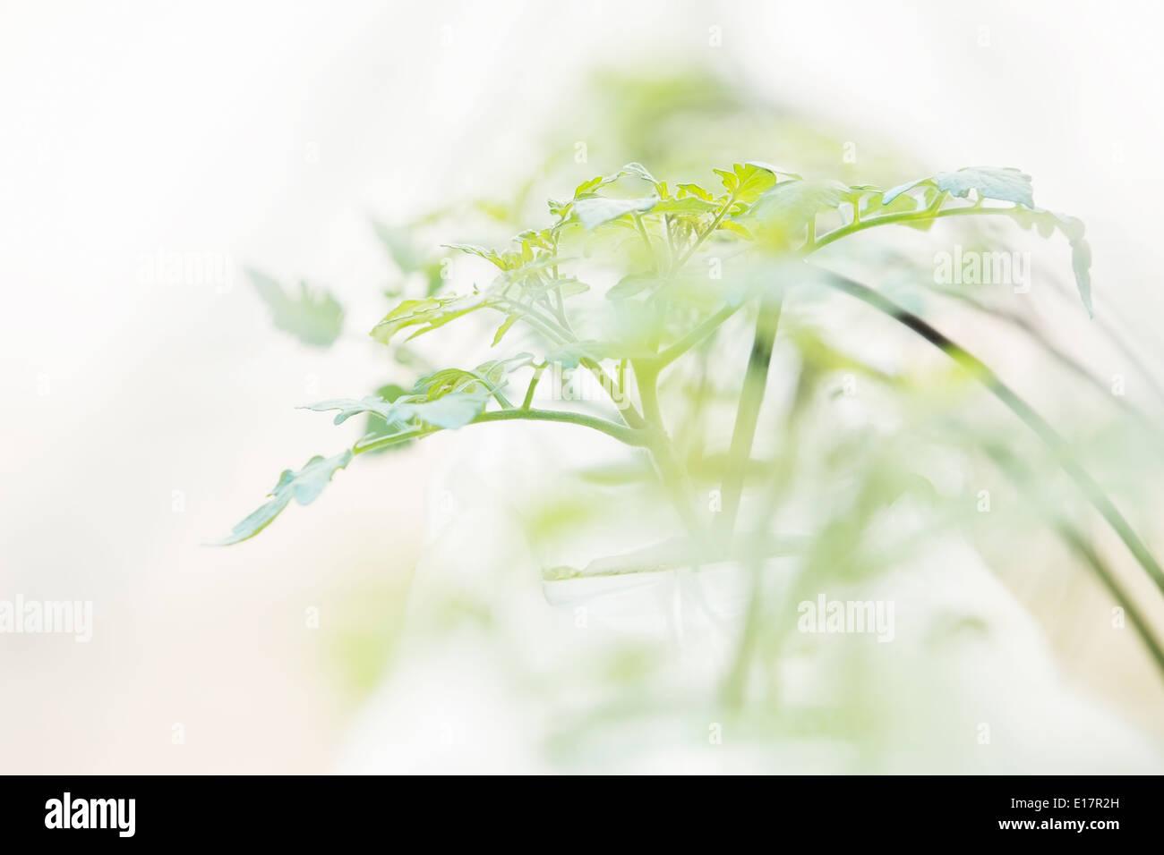 Close up of plant sapling - Stock Image