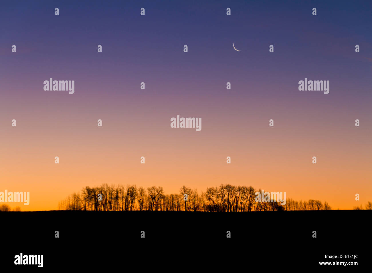 Waning crescent Moon at dawn from home, Nov. 4, 2010. Taken with 18-200mm lens and Canon 7D. Taken from southern Alberta, Canada - Stock Image