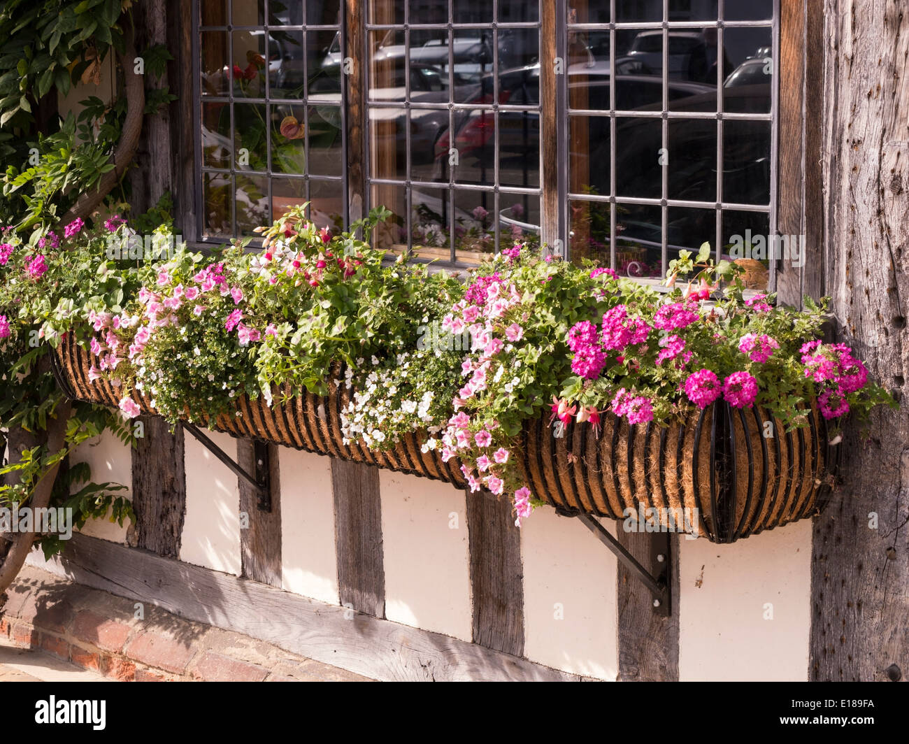 Leaded glass windows and window box with flowers on old oak framed house, Lavenham, Suffolk, England, UK - Stock Image