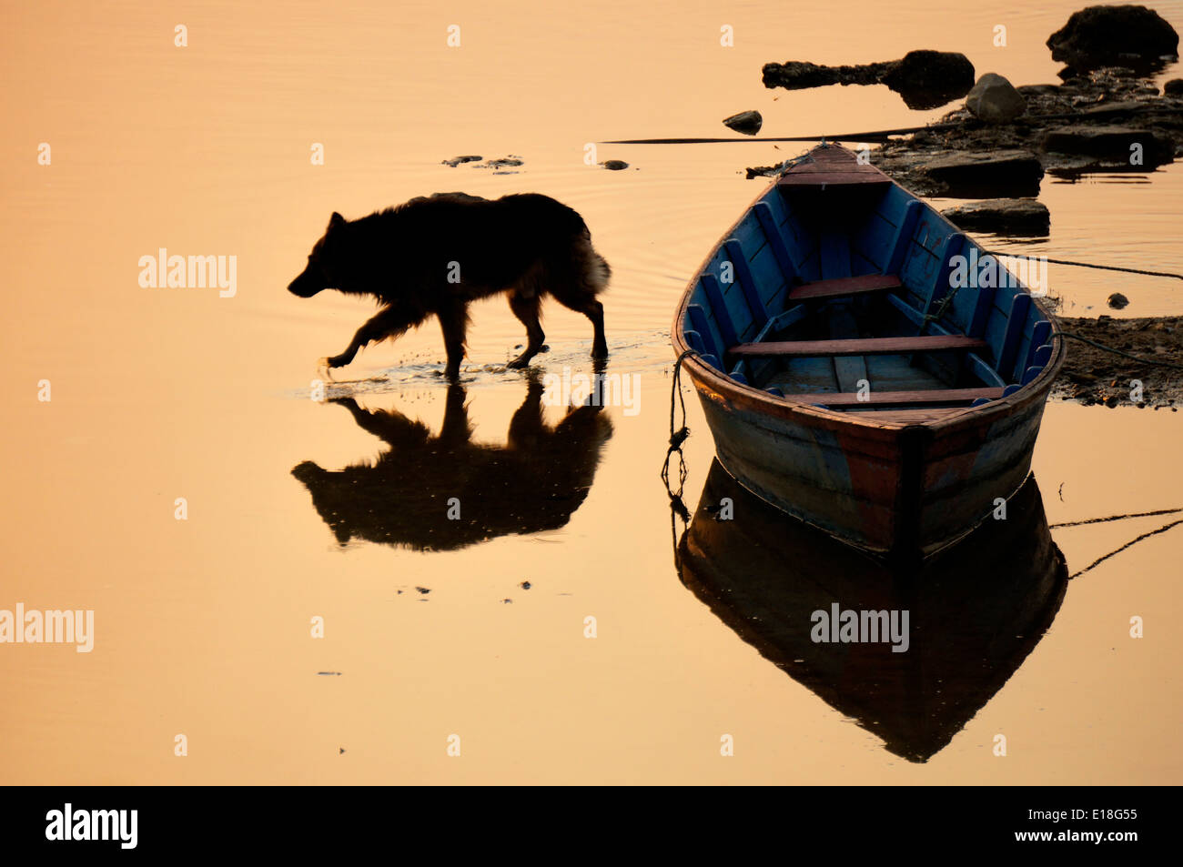 Dog is walking on water at the sunset - Stock Image