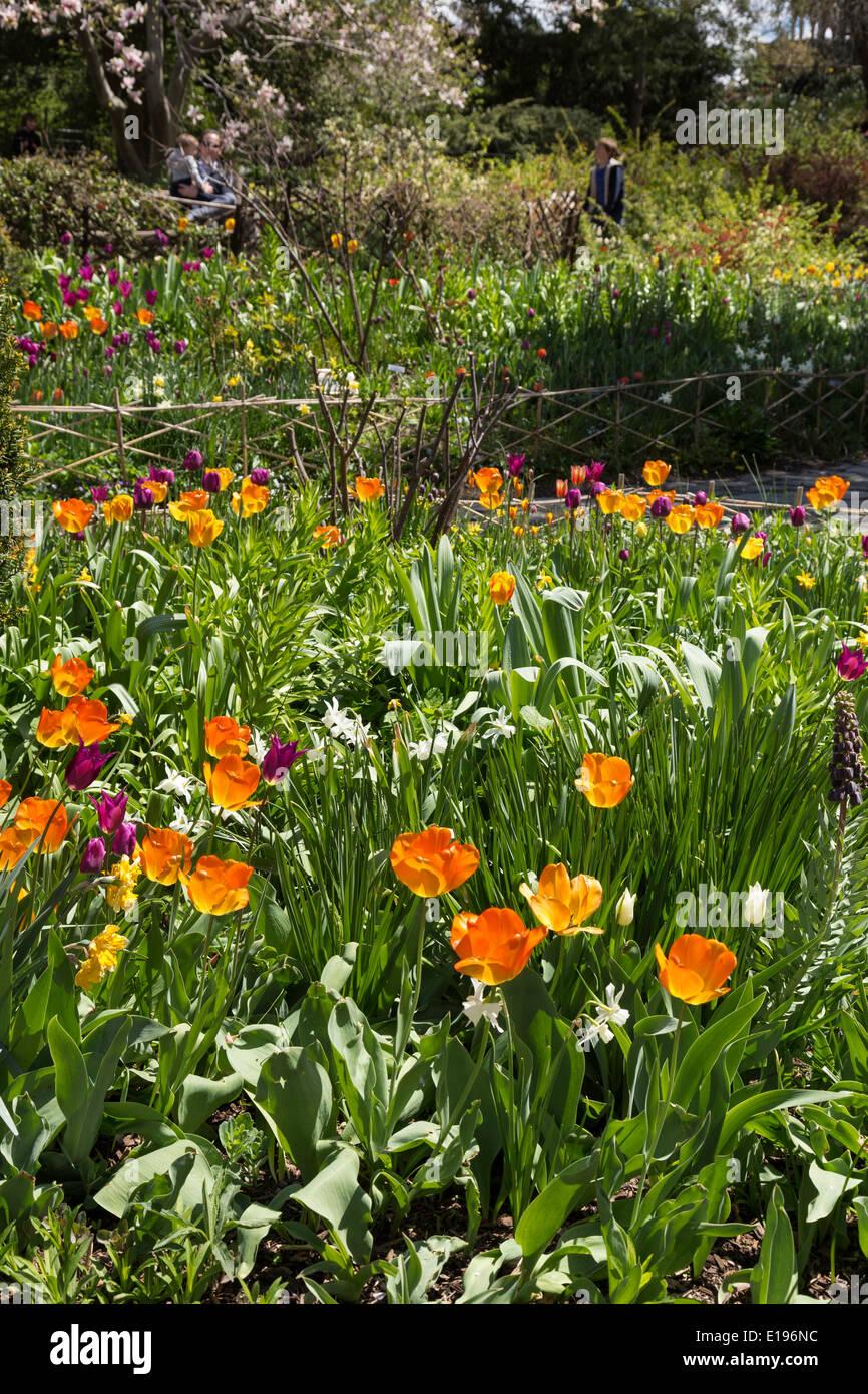 shakespeare garden in central park nyc usa - Shakespeare Garden Central Park