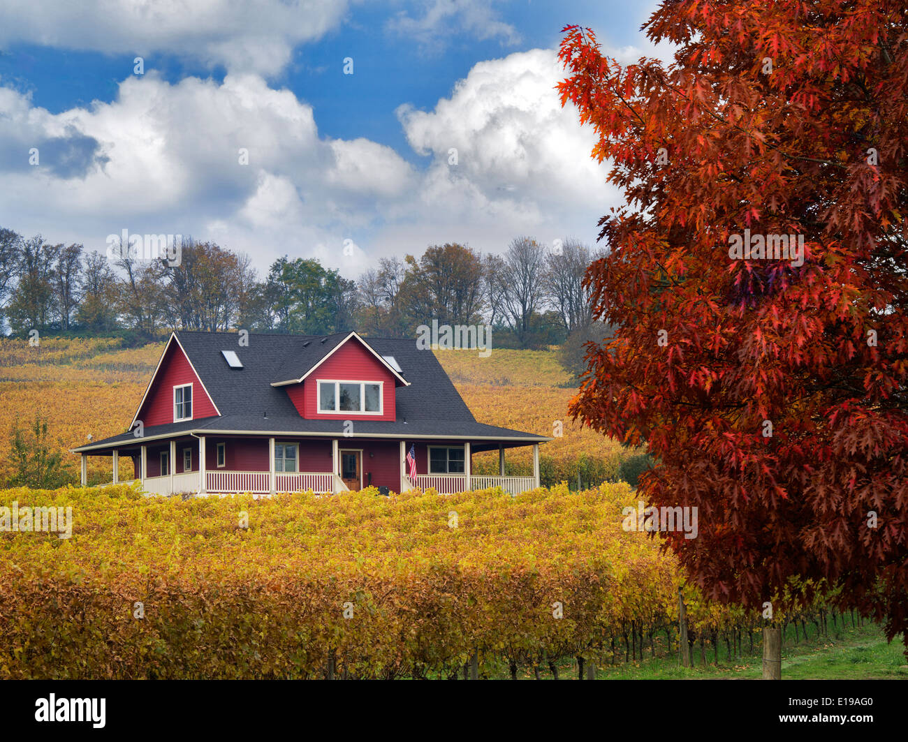 Sokol Blosser Vineyards in fall color and house. Oregon - Stock Image