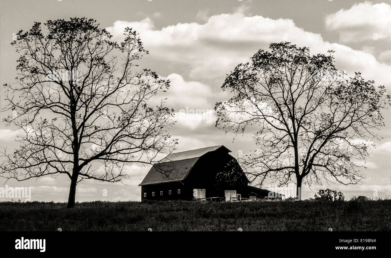 Two towering trees that have lost most of their leaves flank a barn and create this black-and-white landscape silhouette in rural Arkansas, USA. - Stock Image