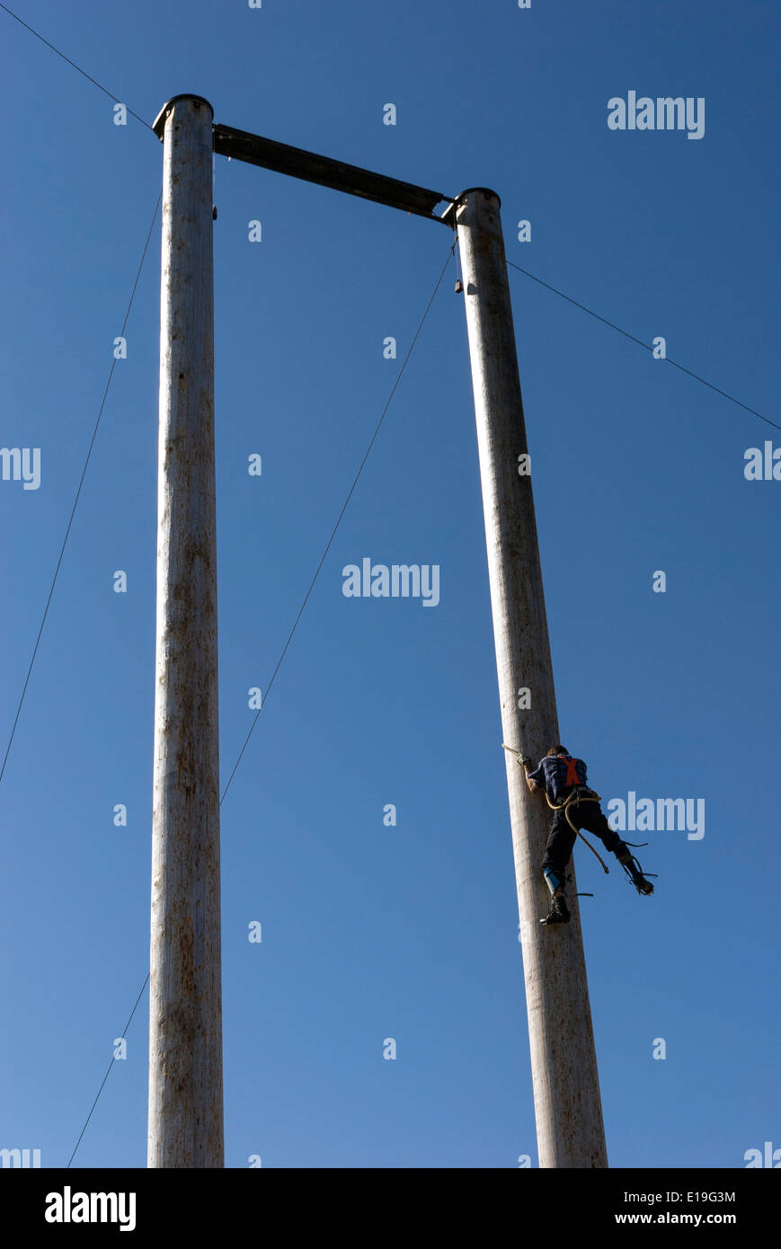 Elk203-1017v Canada, British Columbia, Vancouver, Grouse Mountain, lumberjack climbing demonstration - Stock Image