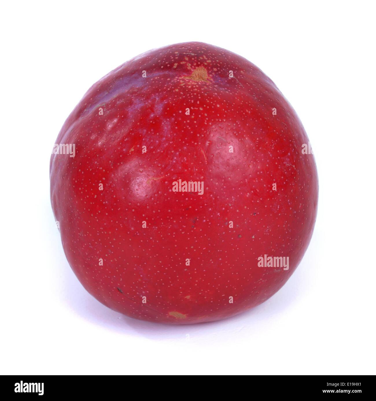 Rote Sapphir Pflaume - Stock Image