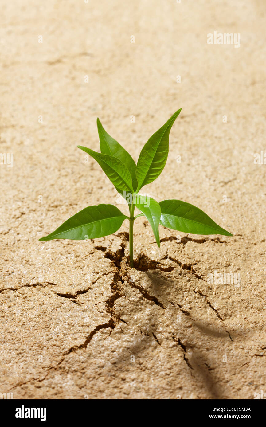 small plant breaking out from cracked soil - Stock Image