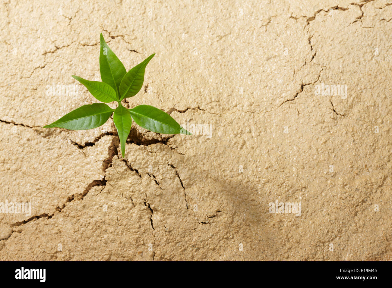 small plant breaking out from cracked soil Stock Photo