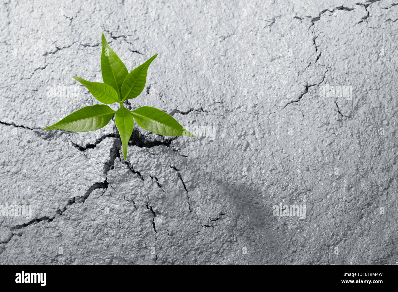 small plant breaking out from cement ground - Stock Image