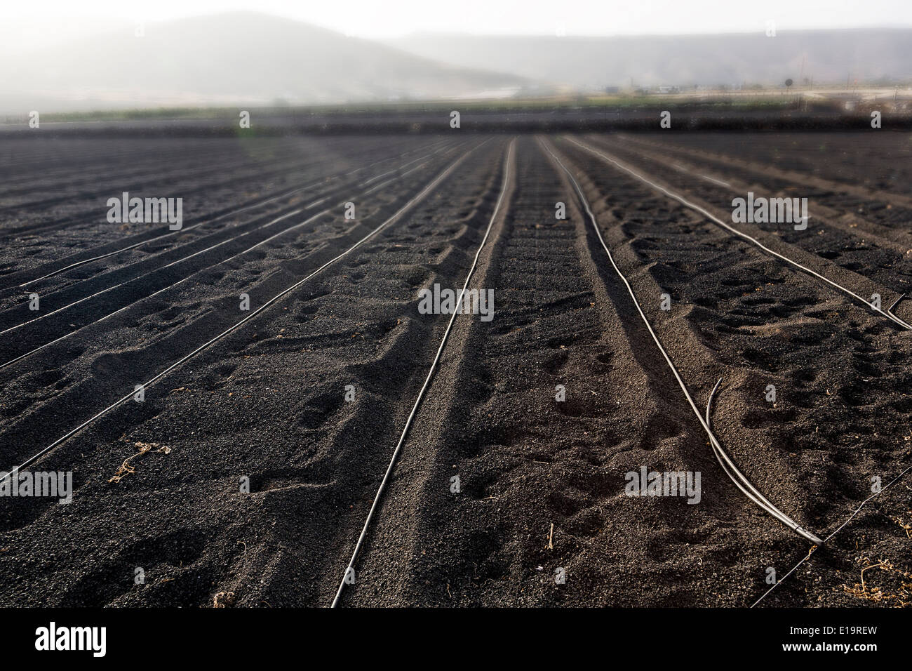 Irrigation pipes laid on bare volcanic soil, Arrieta, Lanzarote, Canary Islands, Spain - Stock Image