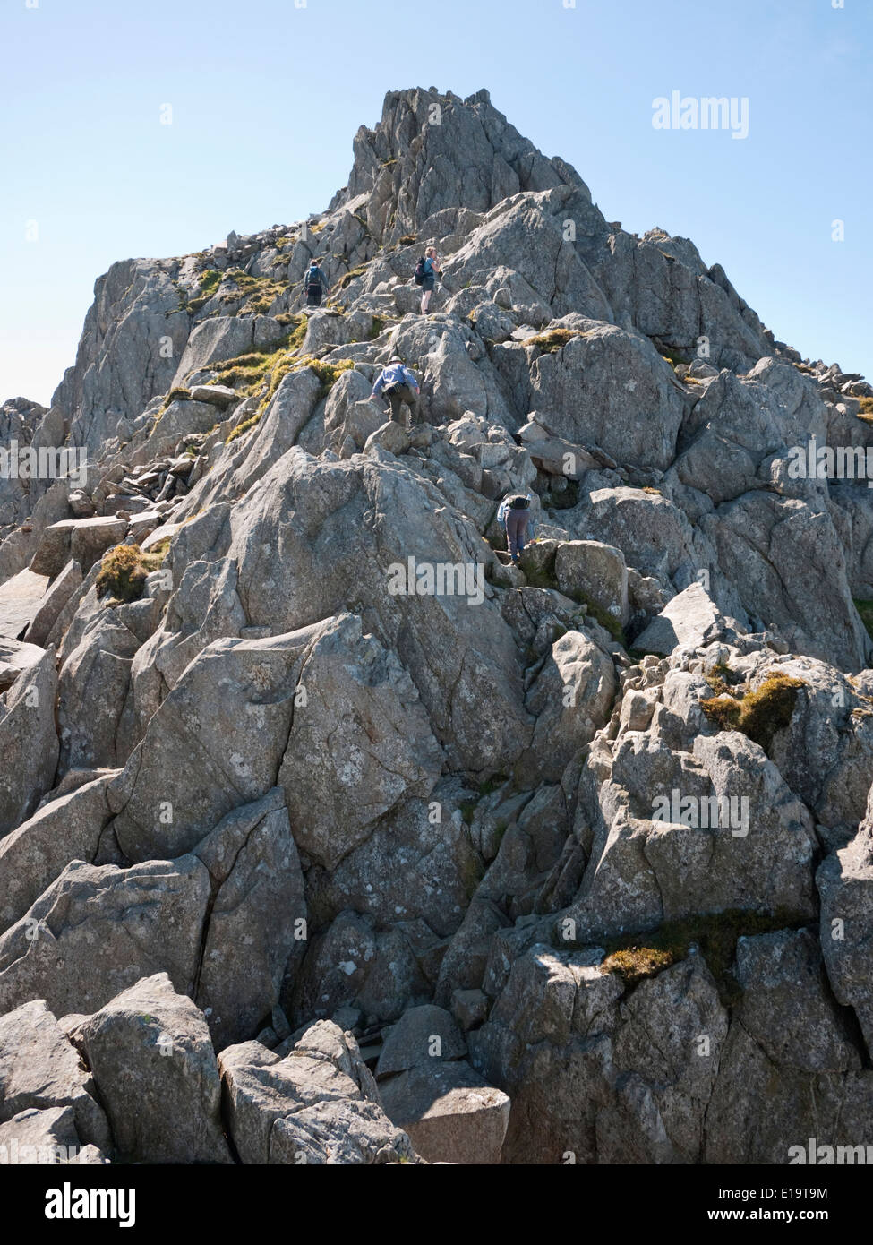 Scramblers ascending from The Notch towards the North Tower on Tryfan's North Ridge - a popular scramble in Snowdonia - Stock Image