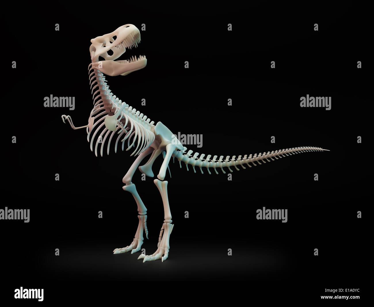 Tyrannosaurus rex, large carnivorous dinosaur, skeleton. - Stock Image