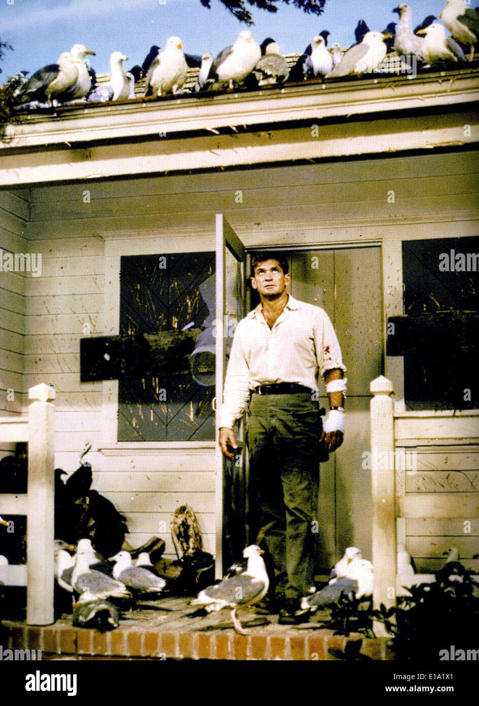 The birds - Rod Taylor - Director : Alfred Hitchcock - Stock Image