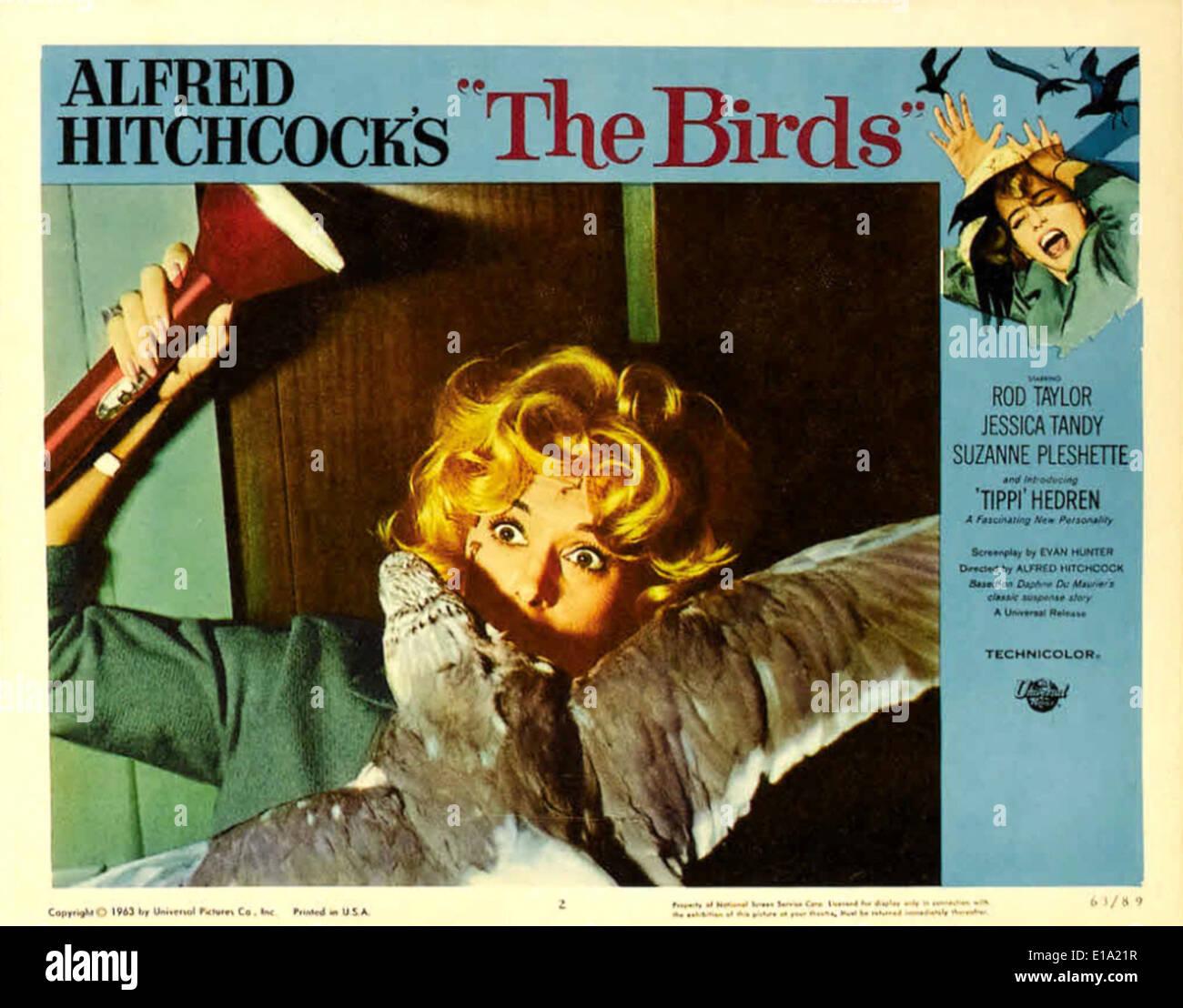 Vögel Film