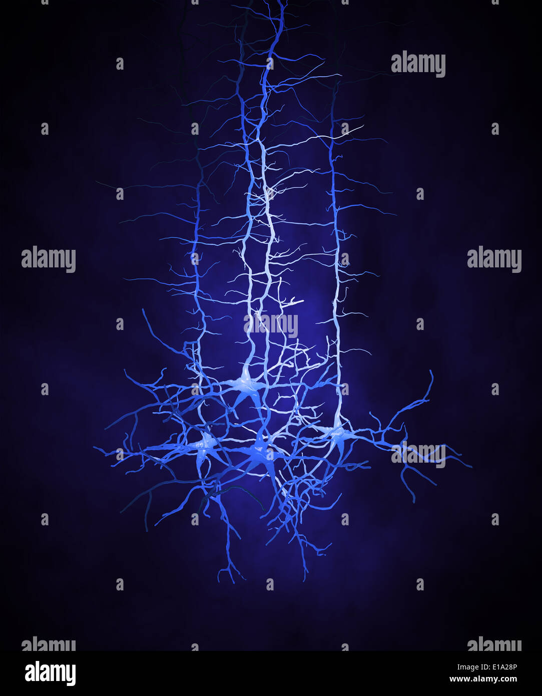 A group of neuron cells - Stock Image
