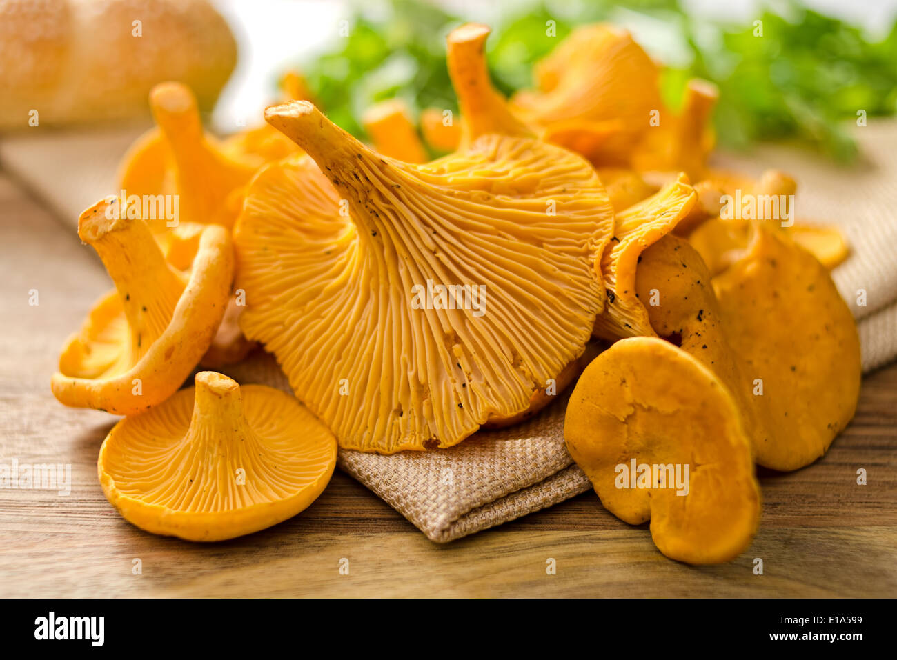 A grouping of freshly picked chanterelle mushrooms. - Stock Image