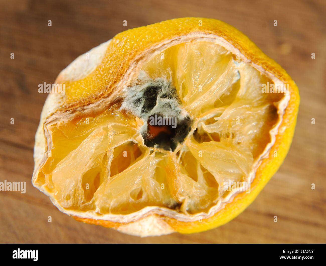 Penicillin mould growing on an old lemon fruit that is passed its best - Stock Image