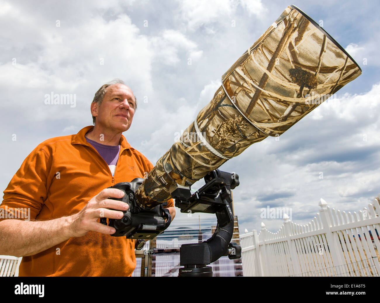 Wildlife photographer H. Mark Weidman working with a large telephoto lens - Stock Image