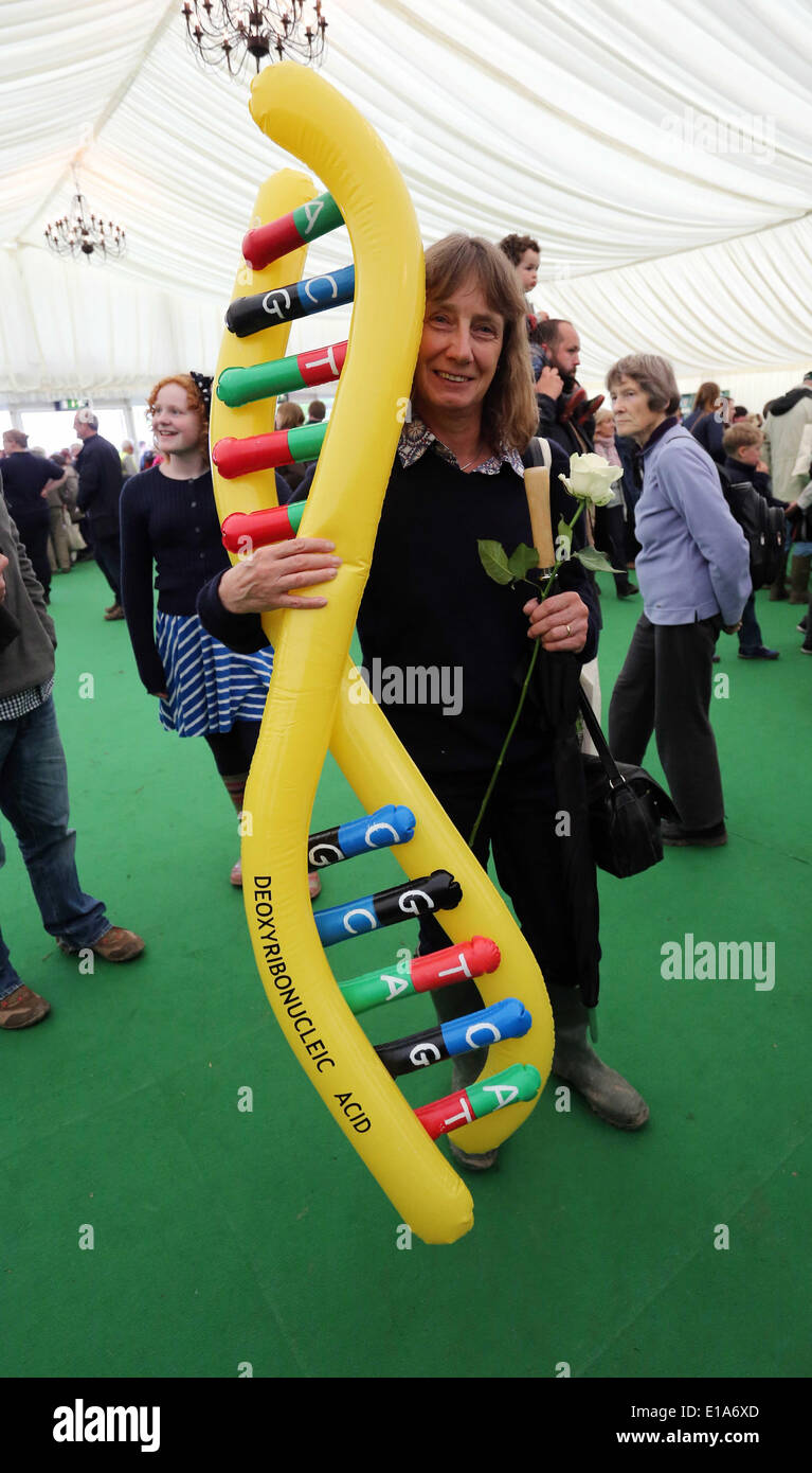 Hay on Wye, Powys, Wales UK. 28th May 2014. Pictured: A woman carrying an inflatable DNA Deoxyribonucleic Acid. Re: The Hay Festival, Hay on Wye, Powys, Wales UK. Credit:  D Legakis/Alamy Live News - Stock Image