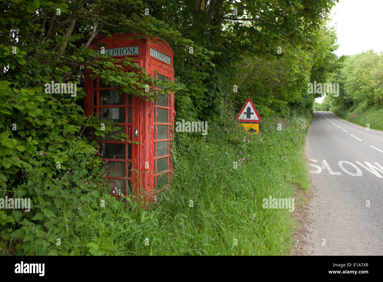 Overgrown on the roadside but still working Red Telephone Box in Cornwall near Liskeard - Stock Image