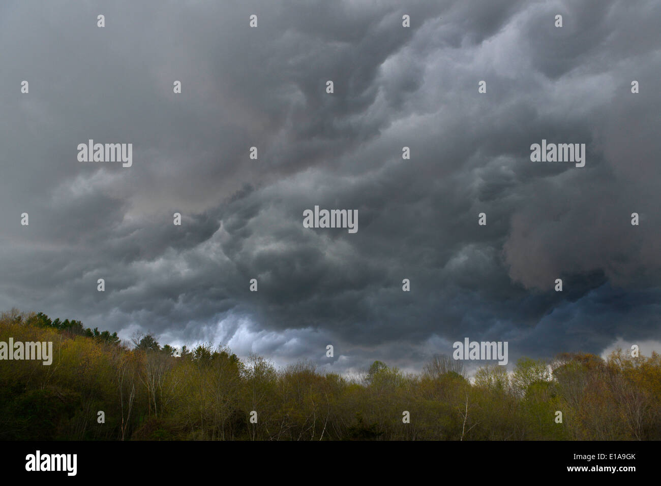 Cumulonimbus torm clouds gather above trees in Southbury, Connecticut. - Stock Image
