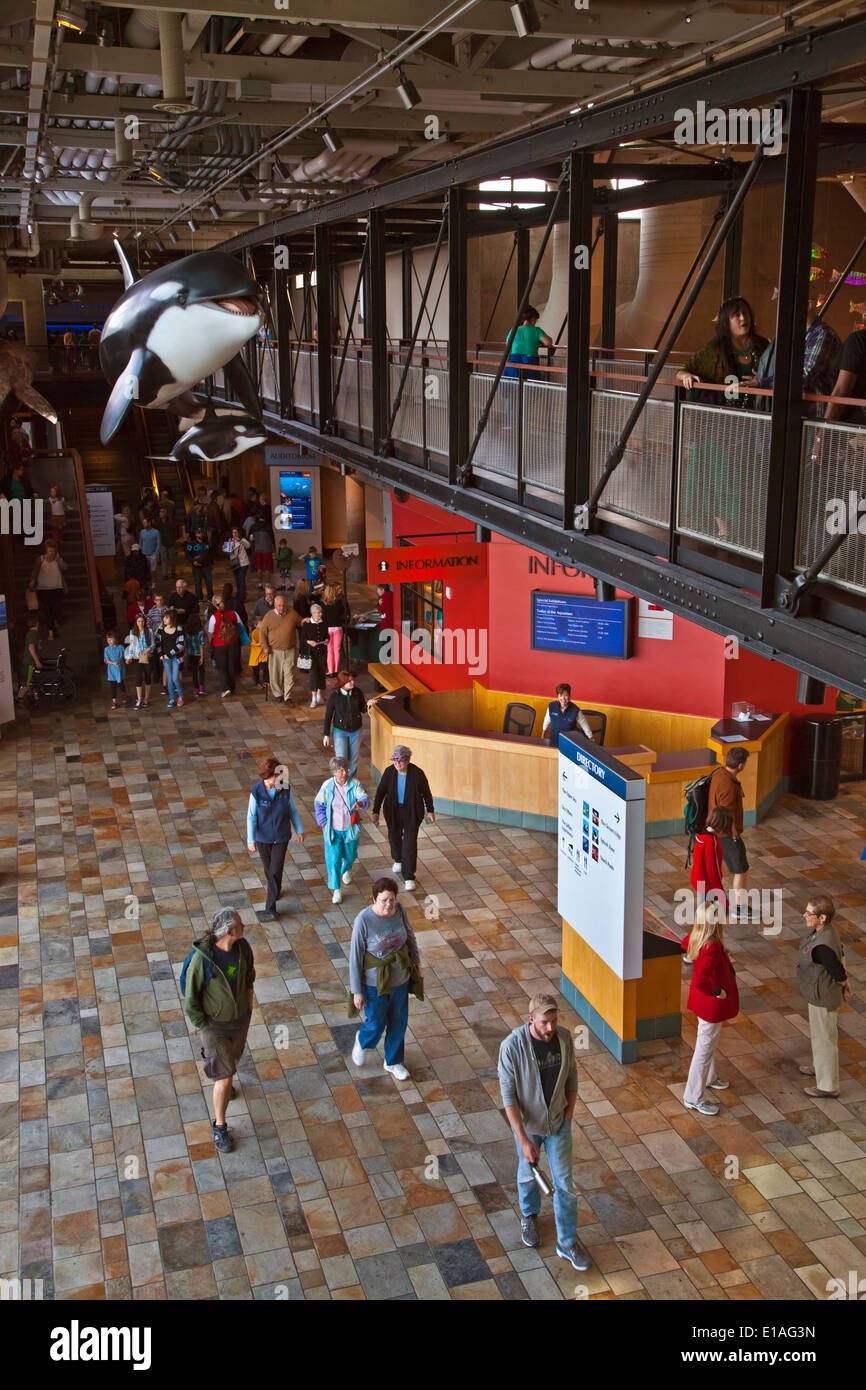 Tourists enjoy visiting the MONTEREY BAY AQUARIUM with its large orca statue - MONTEREY, CALIFORNIA - Stock Image