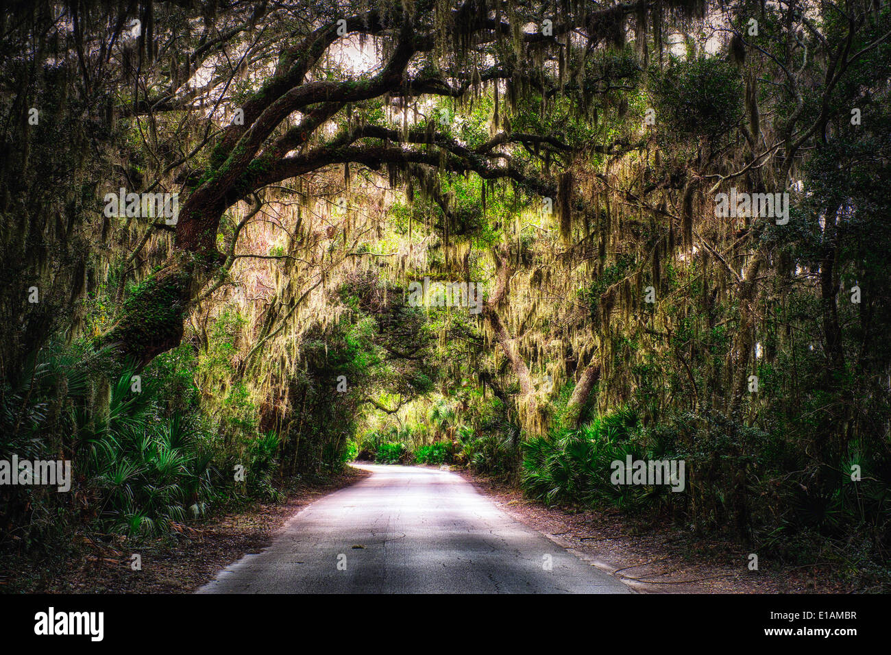 Southern Plantation Road with Tree Canopy with Spanish Moss Hanging from Trees, Amelia Island, Nassau County, Florida - Stock Image