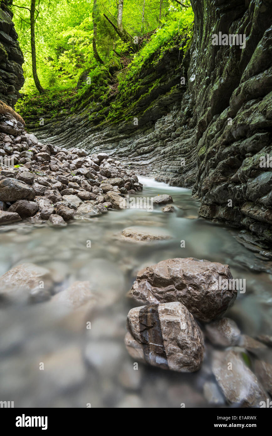 Tributary of the Taugl river, Hallein District, Salzburg, Austria Stock Photo