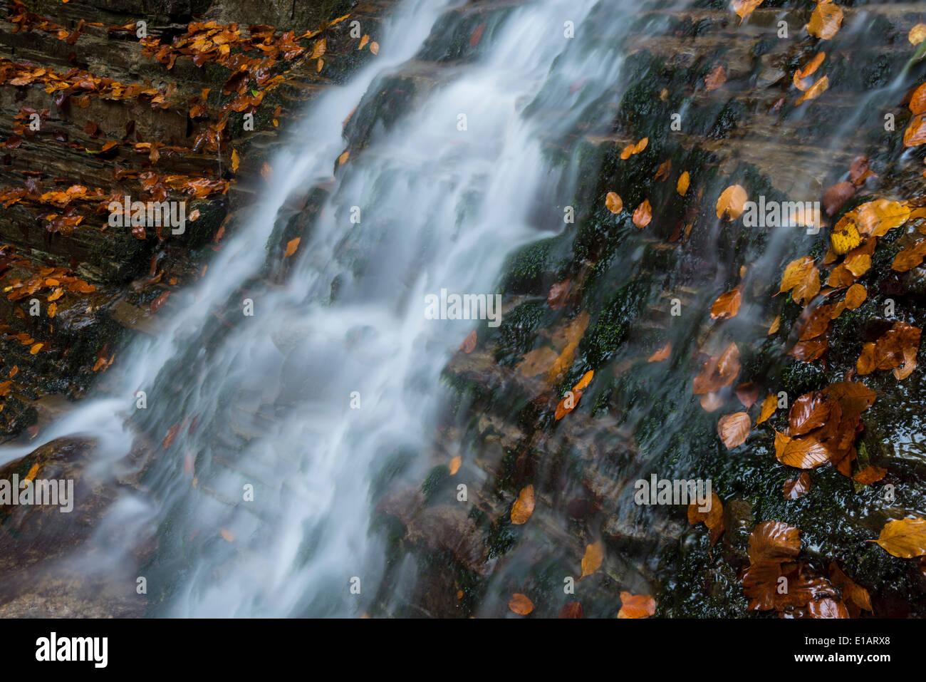 The Taugl river in autumn, Hallein District, Salzburg, Austria Stock Photo