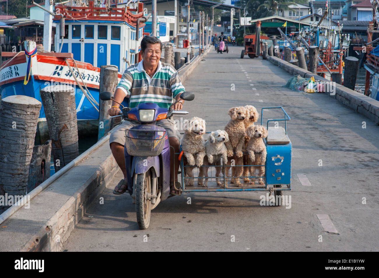 Amusing dogs going for a ride in Thailand - Stock Image