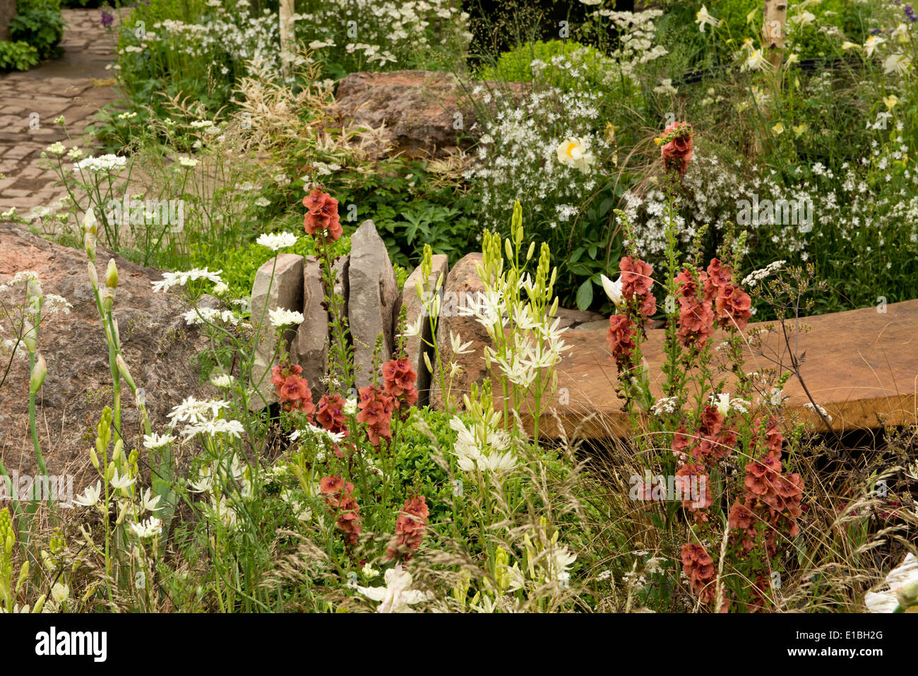 A close-up of flowers in The Vital Earth Night Sky Garden at the Chelsea Flower Show 2014, London, UK - Stock Image