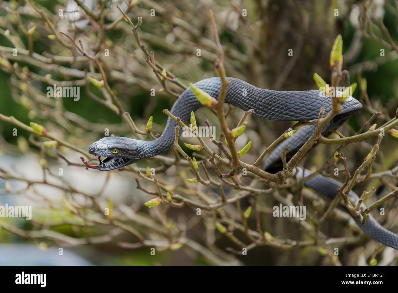 plastic snake in tree - Stock Image