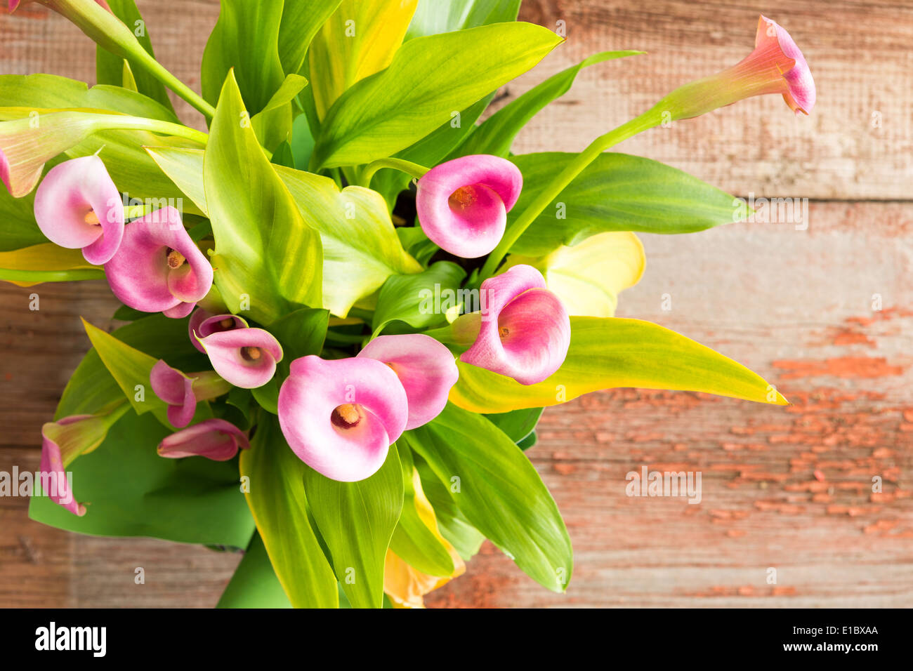 Calla Lily Flowers On Rustic Stock Photos Calla Lily Flowers On