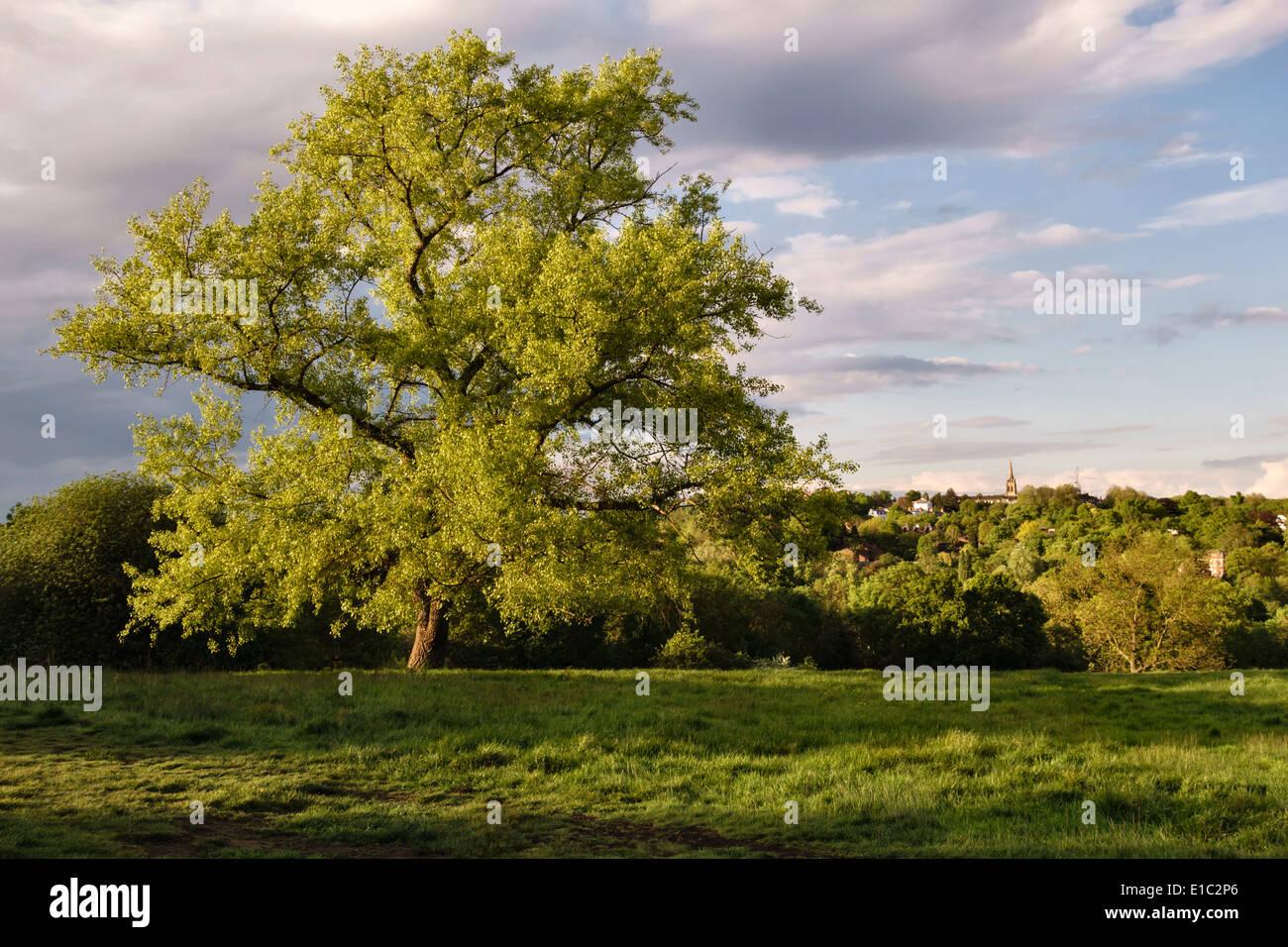 View on Parliament Hill Fields, Hampstead Heath, London, UK - Stock Image