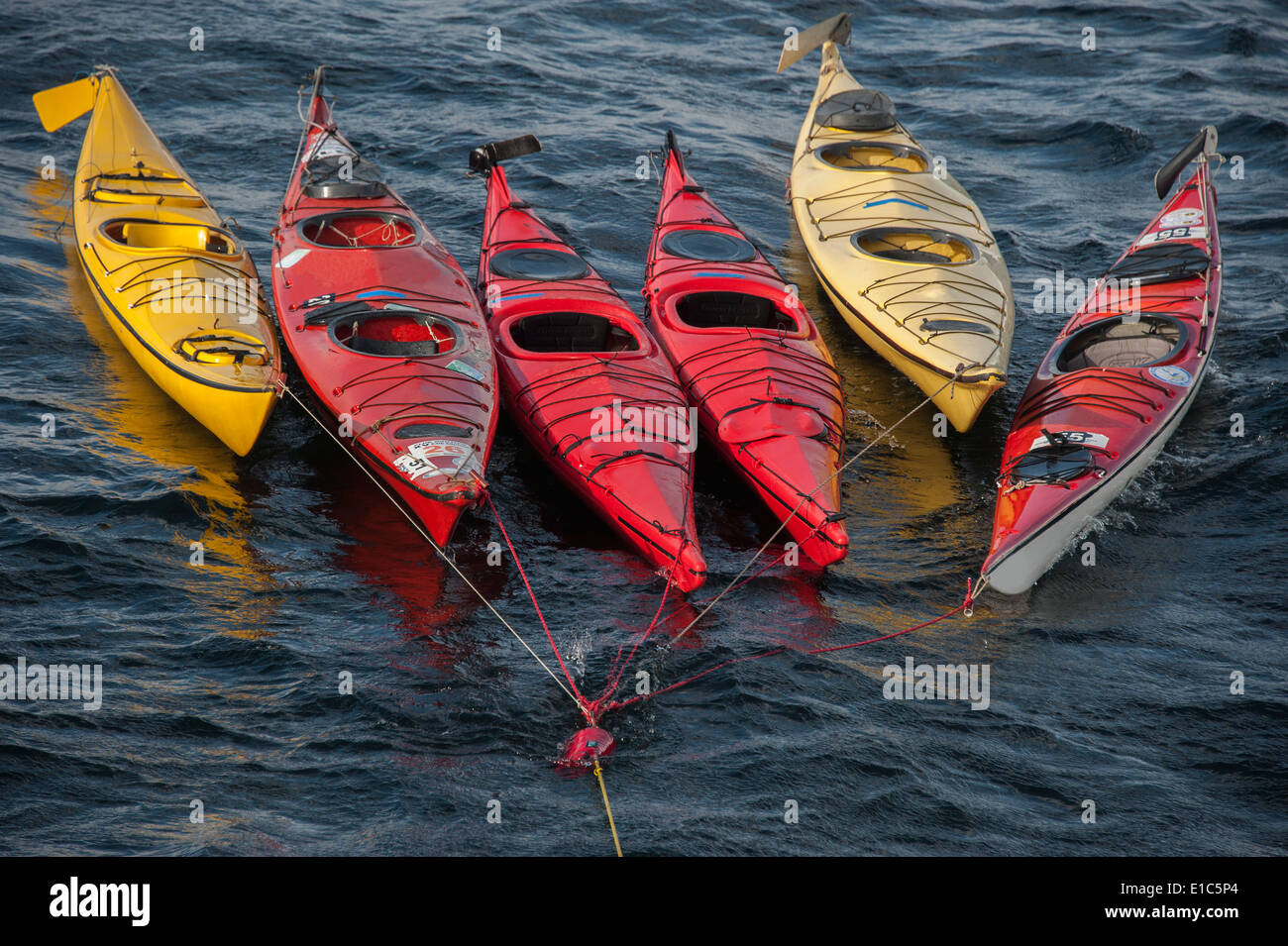 Sea kayaks moored on a long mooring rope, floating on the water surface. - Stock Image