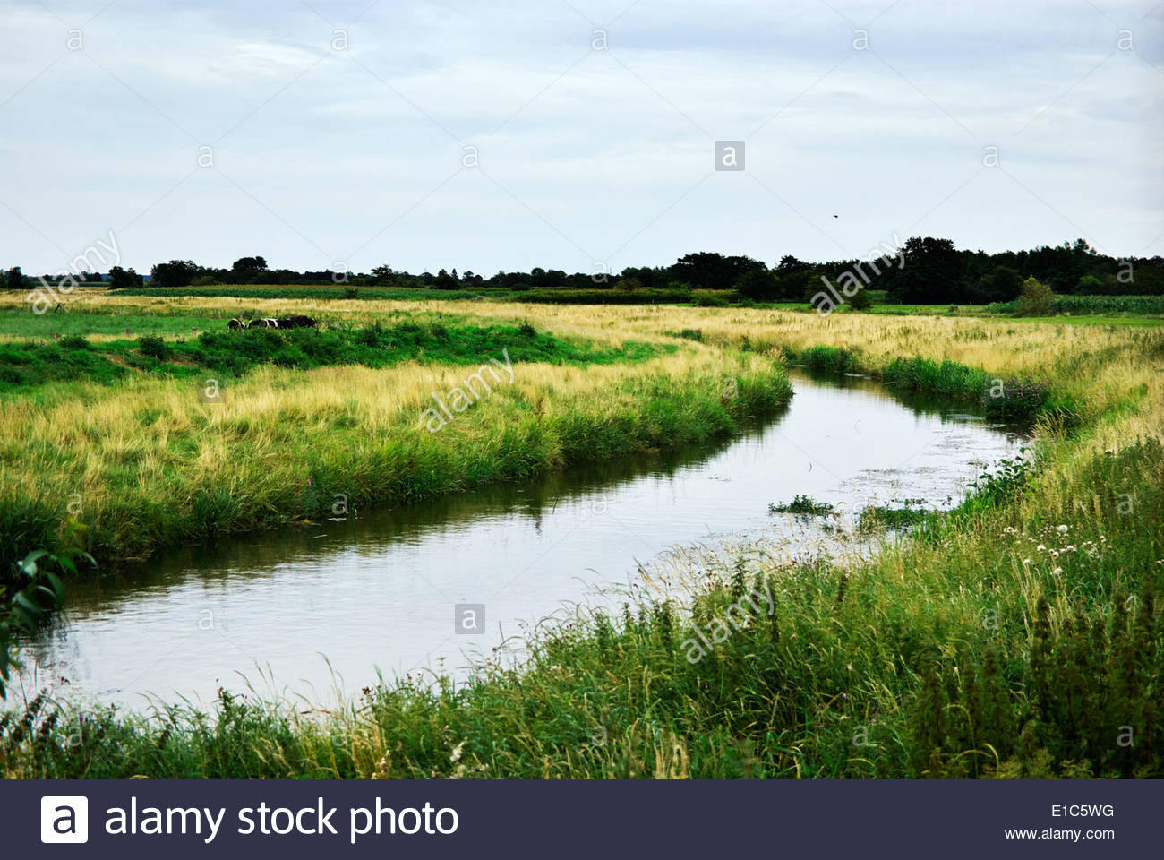 The Rheider Au is a tributary of the Treene, the artery by which Viking ships were transported to the North Sea from Haithabu. - Stock Image