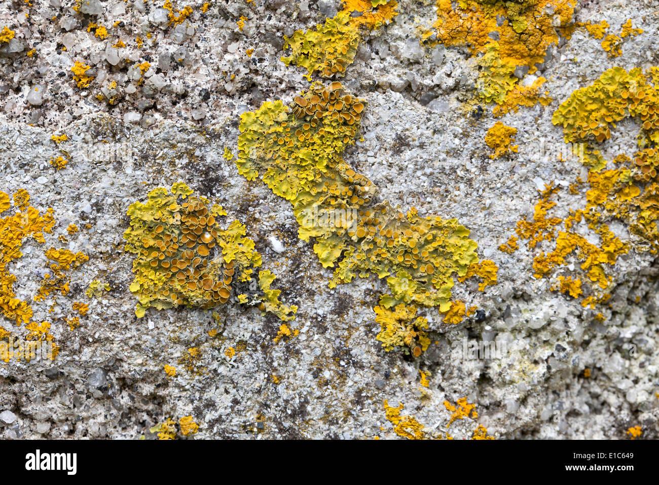 Lichen - Stock Image